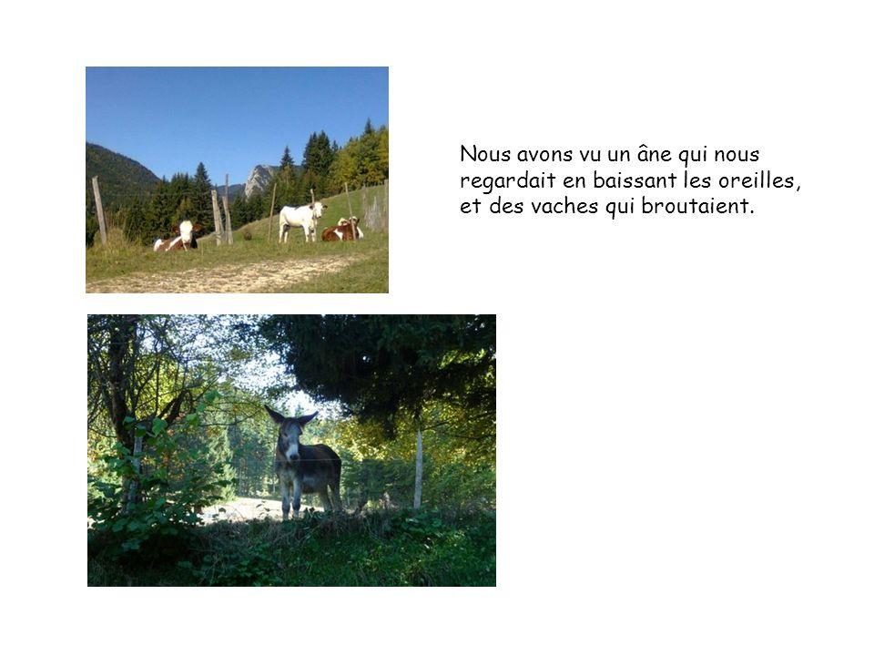 Nous avons vu un âne qui nous regardait en baissant les oreilles, et des vaches qui broutaient.