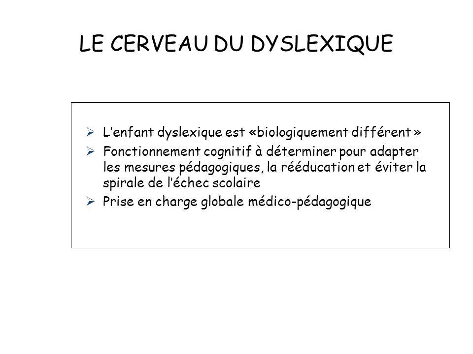 LE CERVEAU DU DYSLEXIQUE Lenfant dyslexique est «biologiquement différent » Fonctionnement cognitif à déterminer pour adapter les mesures pédagogiques, la rééducation et éviter la spirale de léchec scolaire Prise en charge globale médico-pédagogique