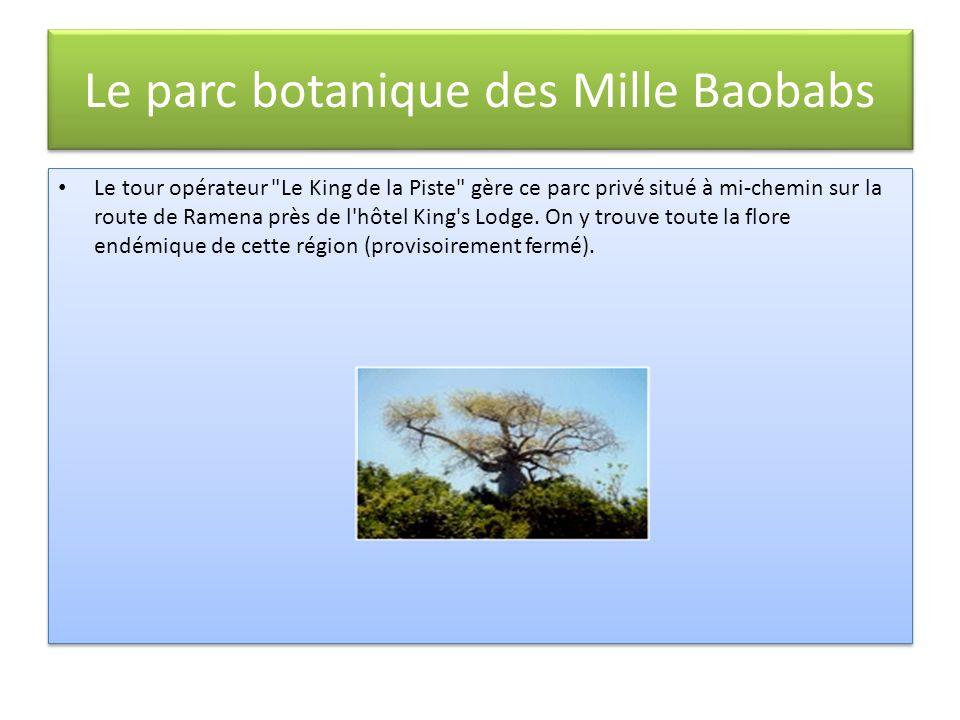 Le parc botanique des Mille Baobabs Le tour opérateur