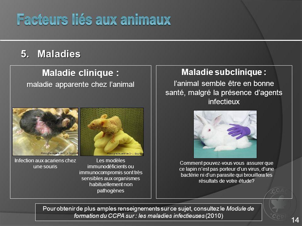 Maladie clinique : maladie apparente chez lanimal Maladie subclinique : lanimal semble être en bonne santé, malgré la présence dagents infectieux Infection aux acariens chez une souris 5.