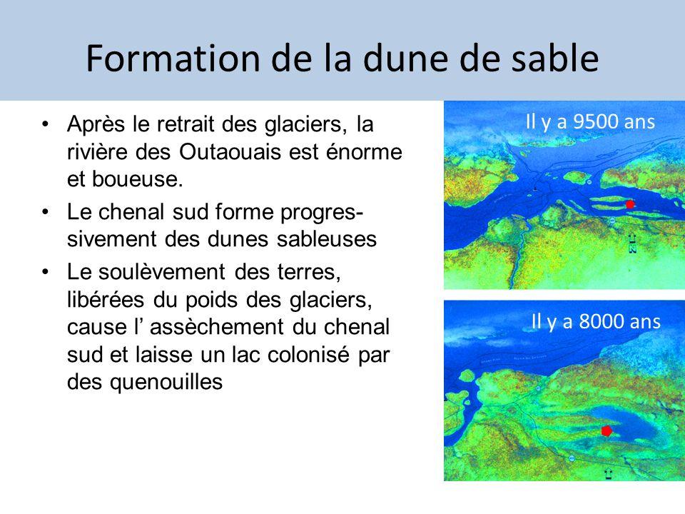 Formation de la dune de sable Après le retrait des glaciers, la rivière des Outaouais est énorme et boueuse. Le chenal sud forme progres- sivement des