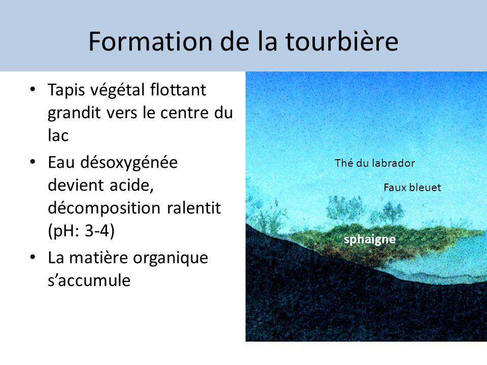 Formation de la tourbière Tapis végétal flottant grandit vers le centre du lac Eau désoxygénée devient acide, décomposition ralentit (pH: 3-4) La mati