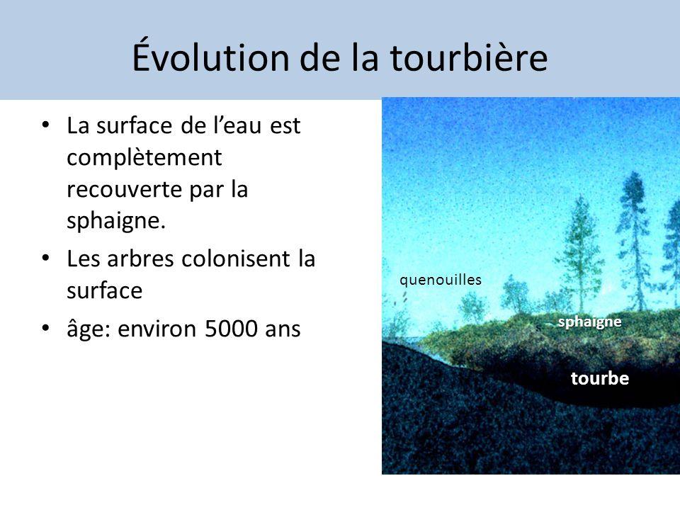 Évolution de la tourbière La surface de leau est complètement recouverte par la sphaigne. Les arbres colonisent la surface âge: environ 5000 ans sphai
