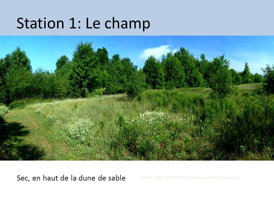 2 juillet 2003, © Antoine Morin (amorin@uottawa.ca) Station 1: Le champ Sec, en haut de la dune de sable