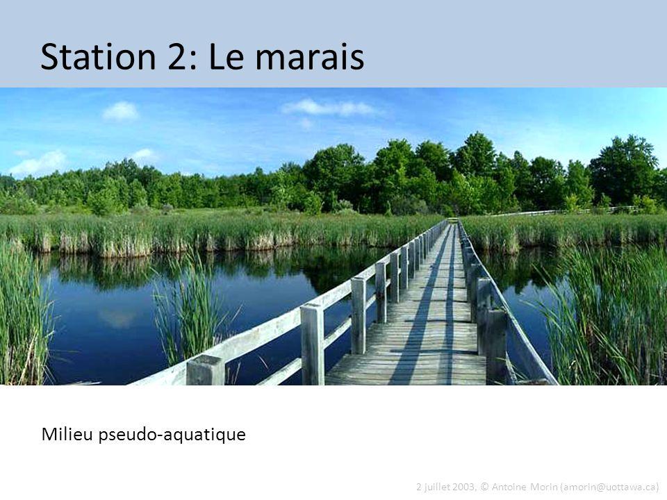 2 juillet 2003, © Antoine Morin (amorin@uottawa.ca) Station 2: Le marais Milieu pseudo-aquatique