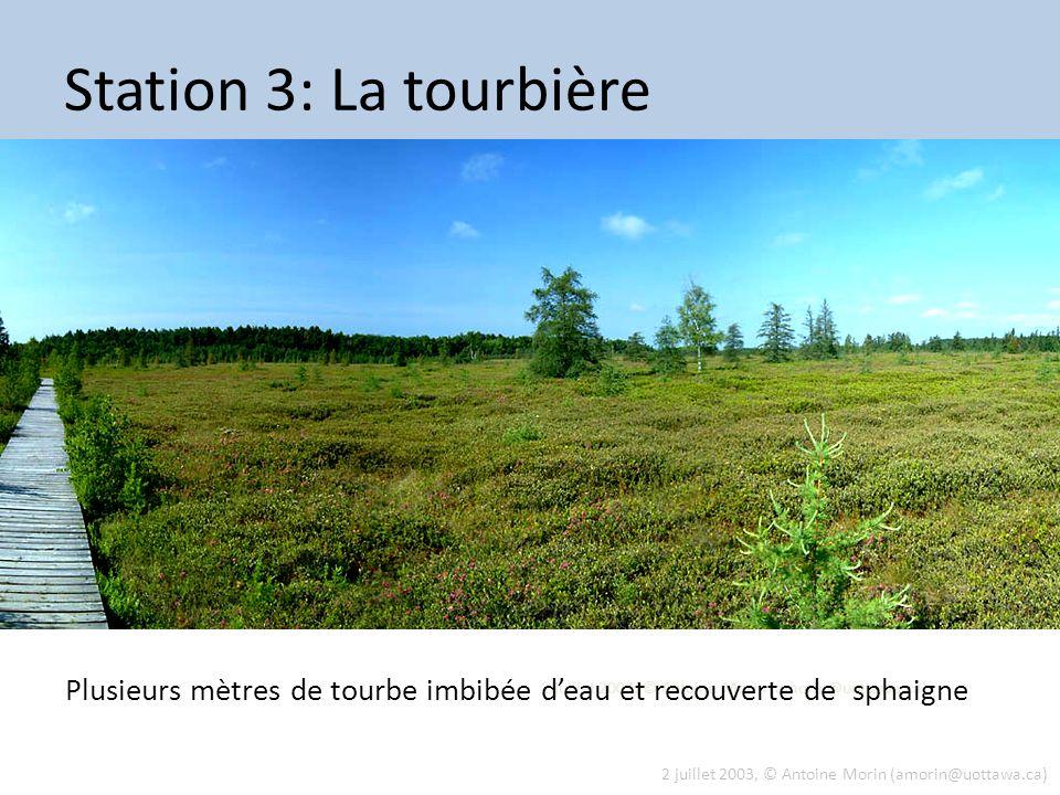 2 juillet 2003, © Antoine Morin (amorin@uottawa.ca) Station 3: La tourbière Plusieurs mètres de tourbe imbibée deau et recouverte de sphaigne 2 juille