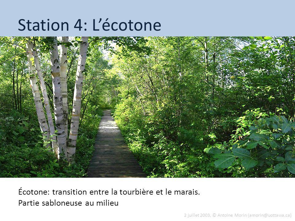 Station 4: Lécotone Écotone: transition entre la tourbière et le marais. Partie sabloneuse au milieu 2 juillet 2003, © Antoine Morin (amorin@uottawa.c