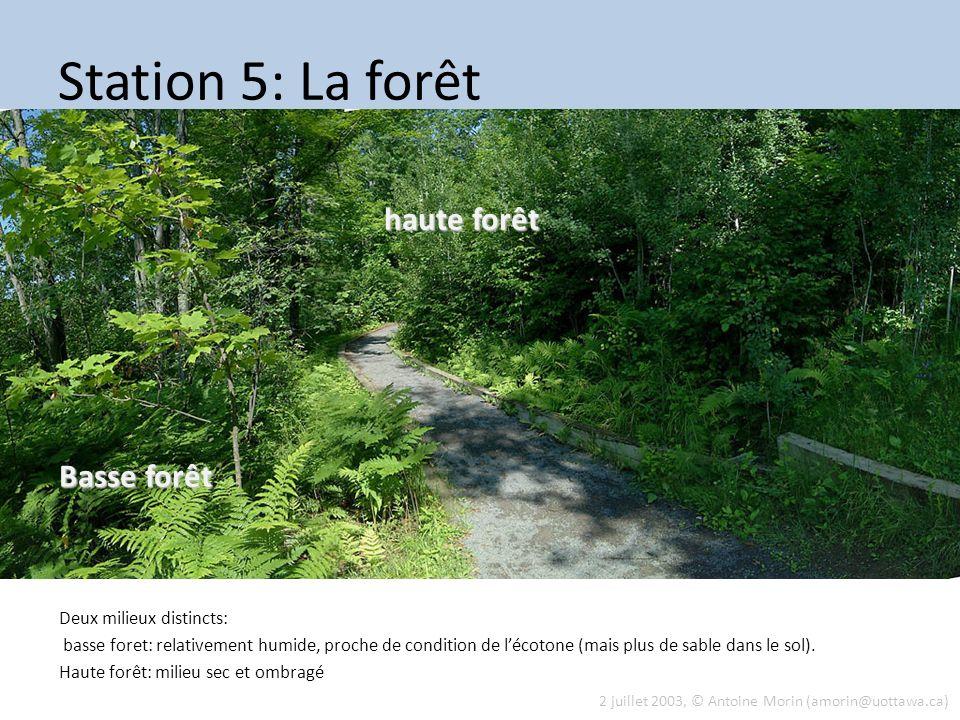 Station 5: La forêt Deux milieux distincts: basse foret: relativement humide, proche de condition de lécotone (mais plus de sable dans le sol). Haute