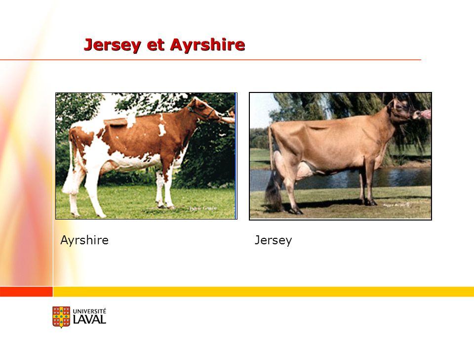 Jersey et Ayrshire JerseyAyrshire