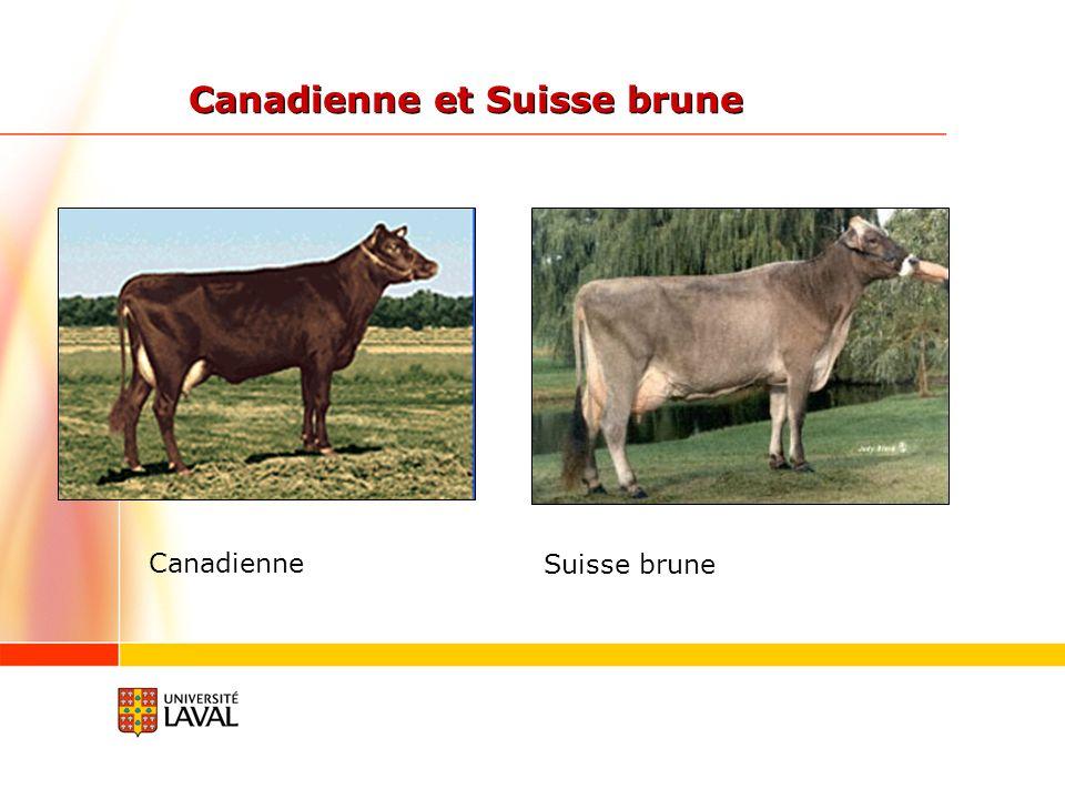 Canadienne et Suisse brune Canadienne Suisse brune