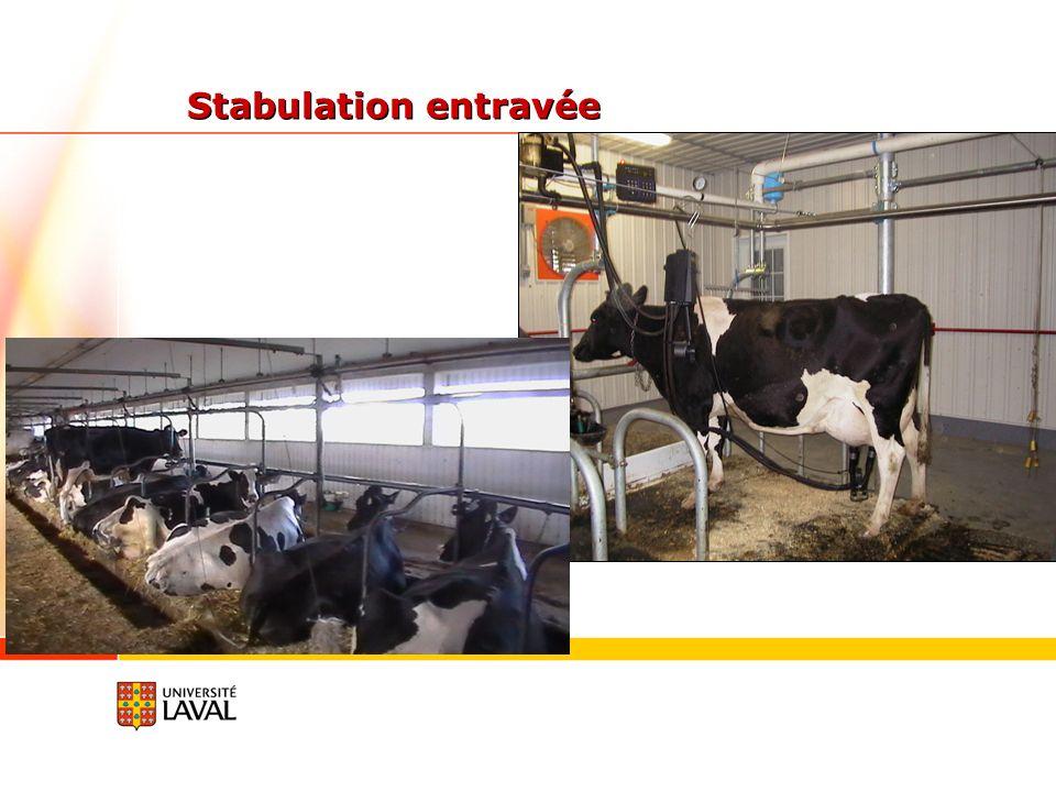 Stabulation entravée
