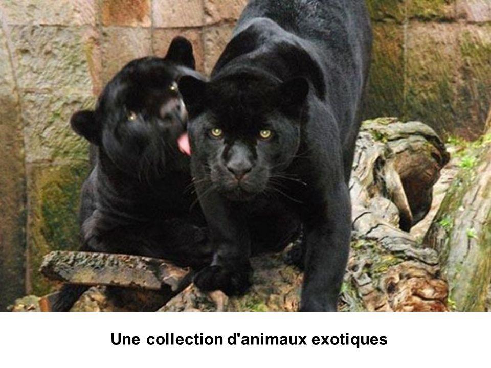 Une collection d'animaux exotiques