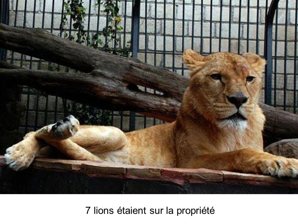 7 lions étaient sur la propriété