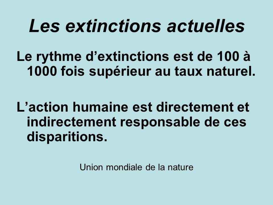 Les extinctions actuelles Le rythme dextinctions est de 100 à 1000 fois supérieur au taux naturel.