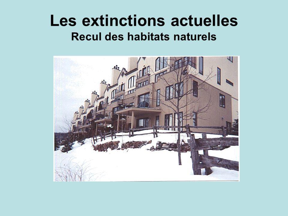 Les extinctions actuelles Recul des habitats naturels