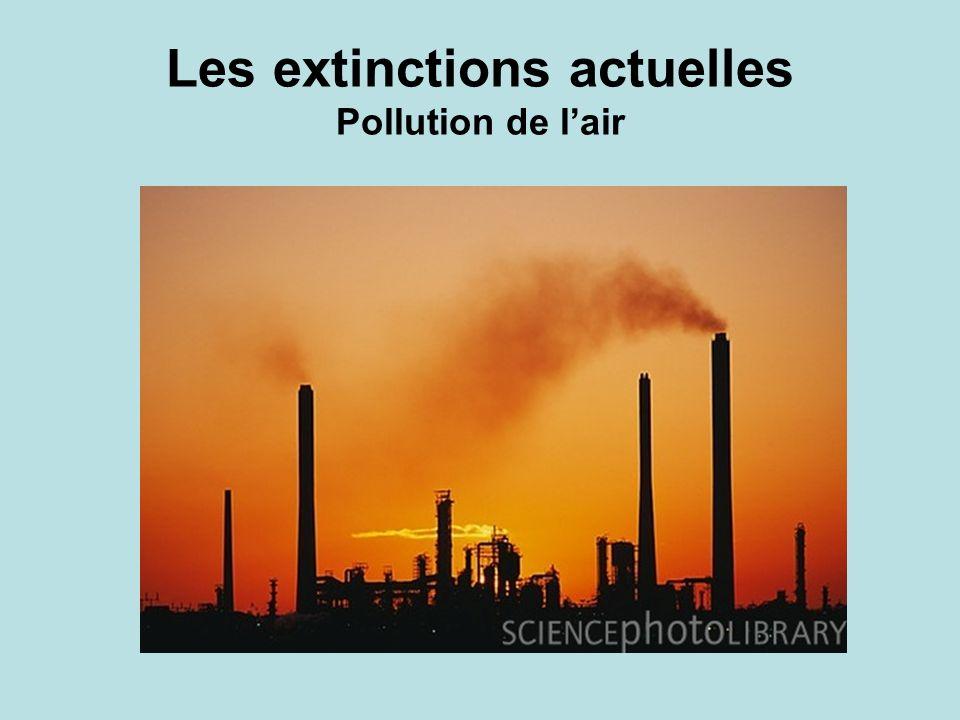 Les extinctions actuelles Pollution de lair