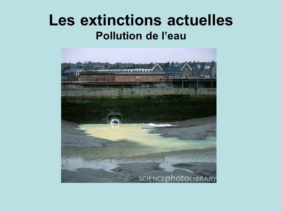 Les extinctions actuelles Pollution de leau