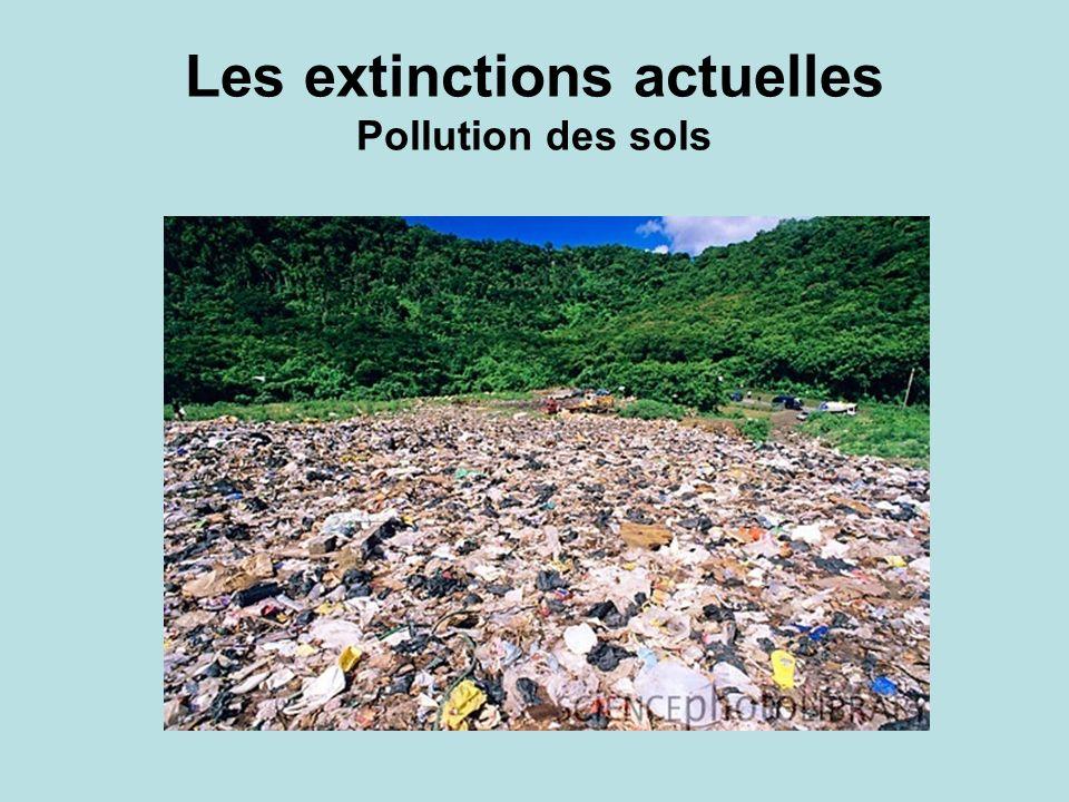 Les extinctions actuelles Pollution des sols