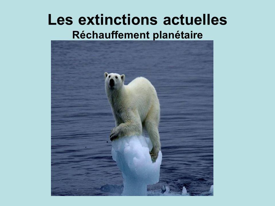 Les extinctions actuelles Réchauffement planétaire