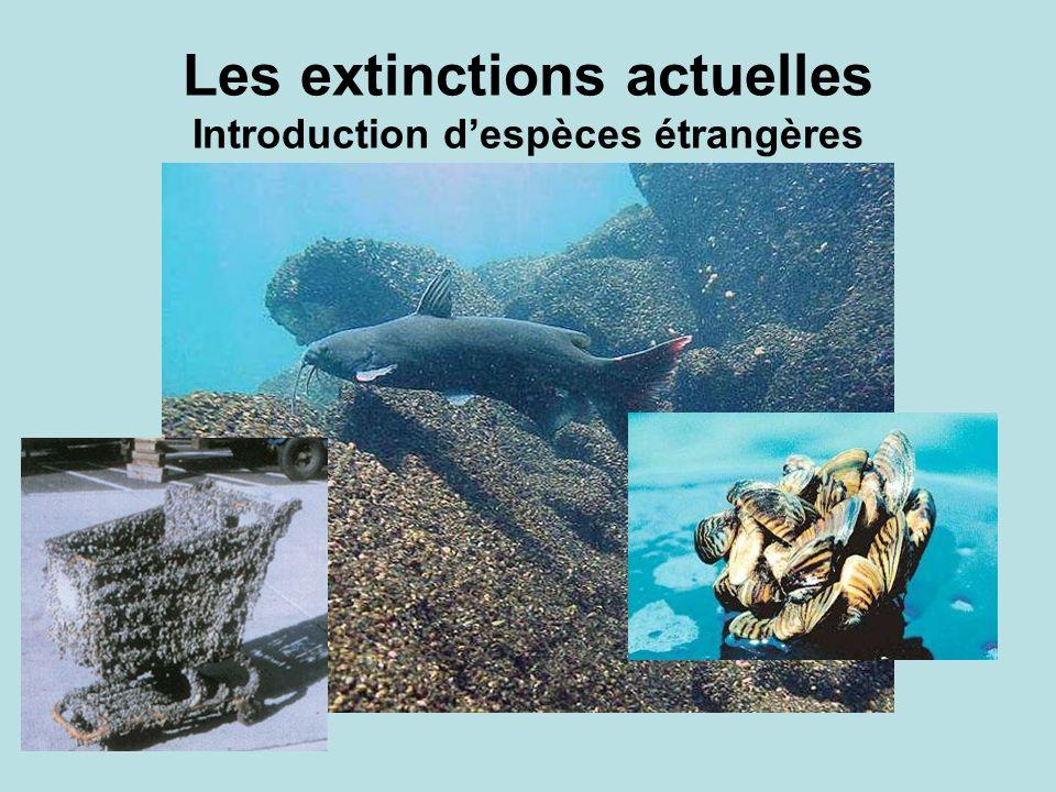 Les extinctions actuelles Introduction despèces étrangères