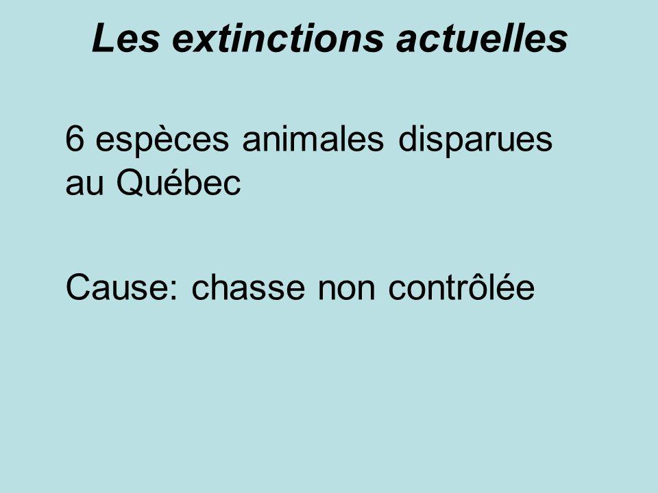 Les extinctions actuelles 6 espèces animales disparues au Québec Cause: chasse non contrôlée