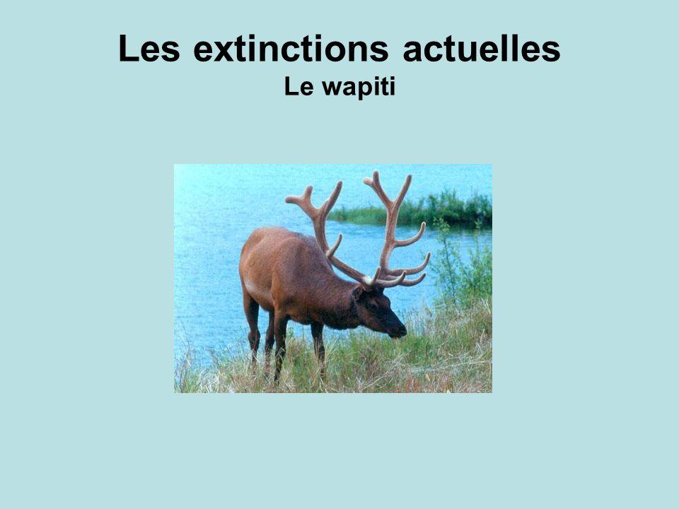 Les extinctions actuelles Le wapiti