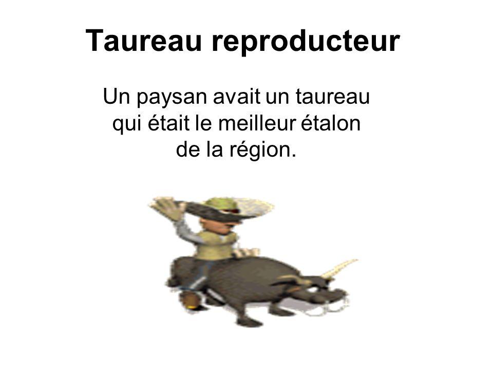 Taureau reproducteur Un paysan avait un taureau qui était le meilleur étalon de la région.
