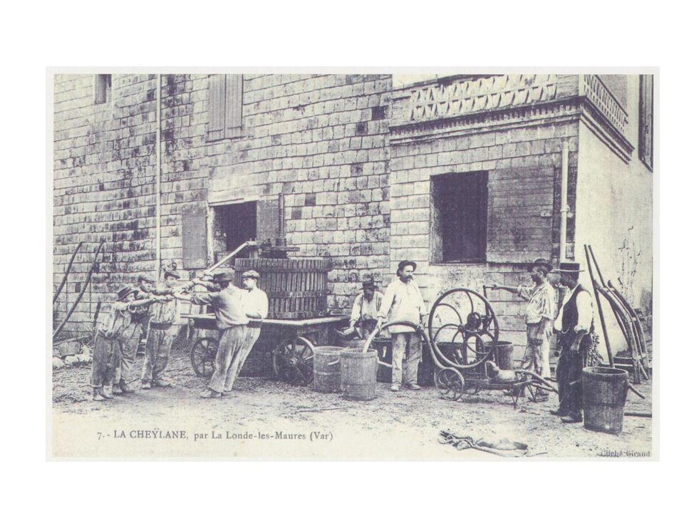 Une viticulture dynamique: un sursaut après la Grande Guerre.