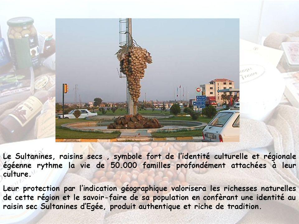 Le Sultanines, raisins secs, symbole fort de lidentité culturelle et régionale égéenne rythme la vie de 50.000 familles profondément attachées à leur culture.