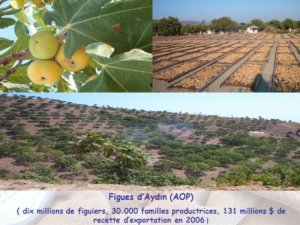 Figues dAydın (AOP) ( dix millions de figuiers, 30.000 familles productrices, 131 millions $ de recette dexportation en 2006 )