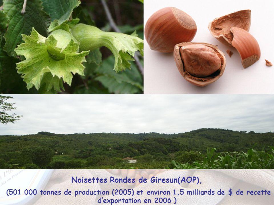 Noisettes Rondes de Giresun(AOP), (501 000 tonnes de production (2005) et environ 1,5 milliards de $ de recette dexportation en 2006 )