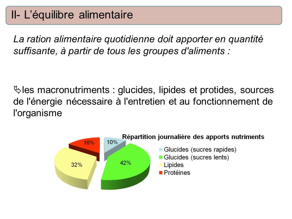 La ration alimentaire quotidienne doit apporter en quantité suffisante, à partir de tous les groupes d'aliments : les macronutriments : glucides, lipi