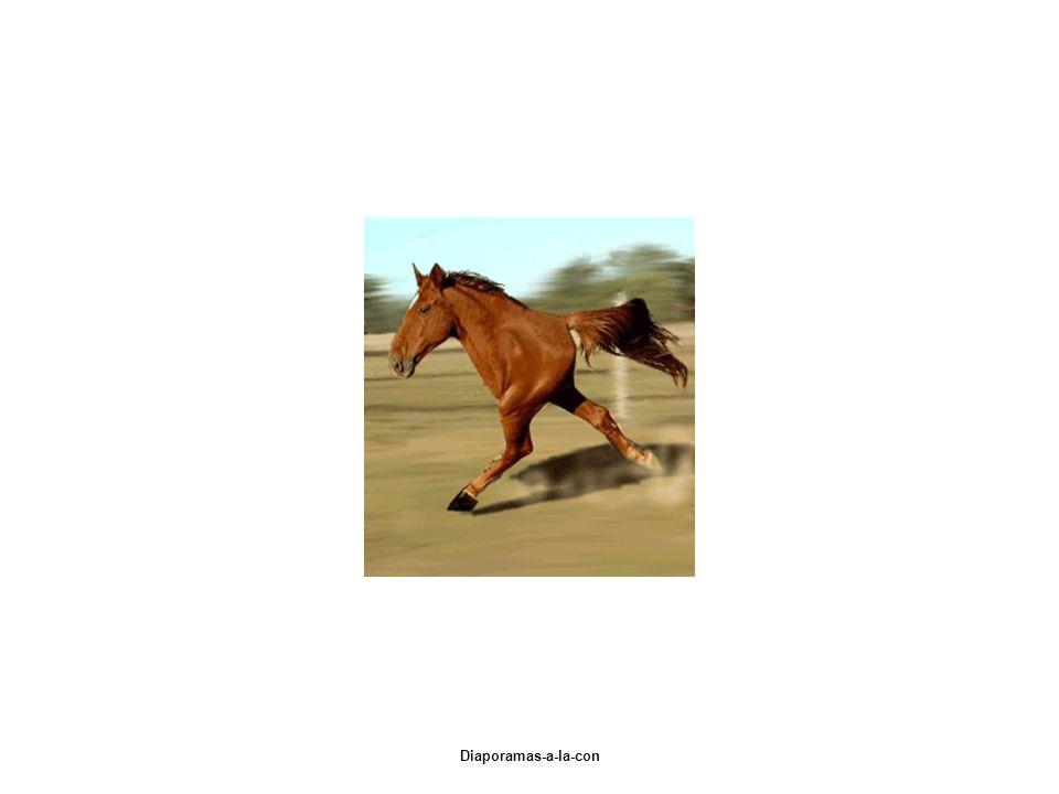 Diaporamas-a-la-con Jépargne pour macheter un cheval et je cherche des « sponsors » car pour le moment je nai que la moitié! Merci davance