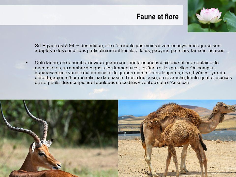 Faune et flore Si lÉgypte est à 94 % désertique, elle nen abrite pas moins divers écosystèmes qui se sont adaptés à des conditions particulièrement hostiles : lotus, papyrus, palmiers, tamaris, acacias,...