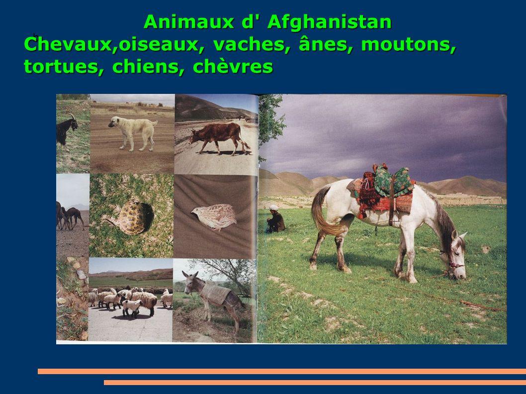 b Animaux d' Afghanistan Chevaux,oiseaux, vaches, ânes, moutons, tortues, chiens, chèvres