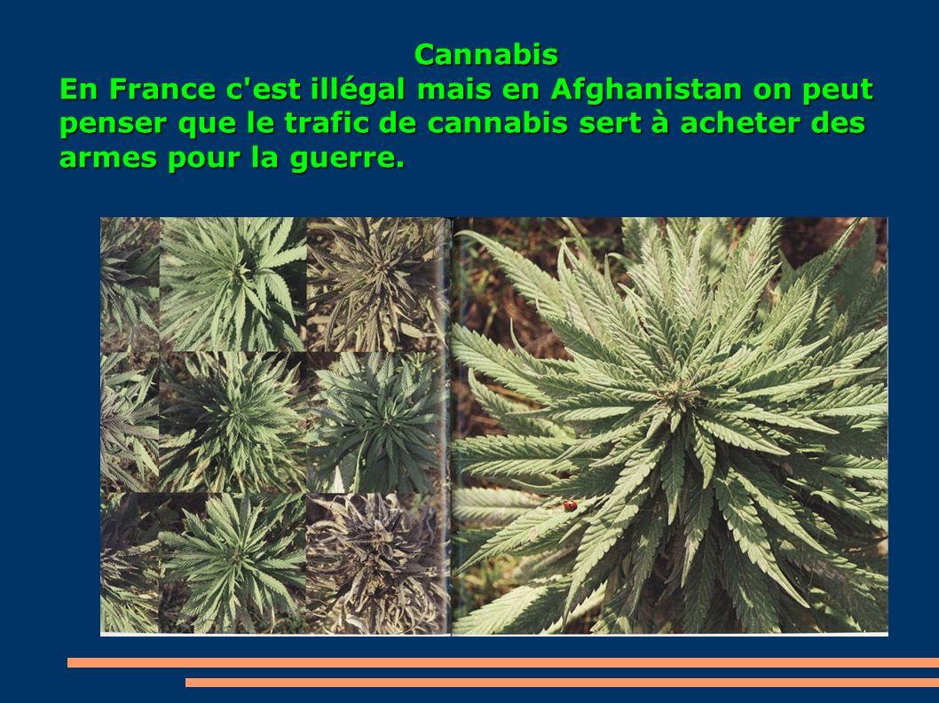 Cannabis En France c'est illégal mais en Afghanistan on peut penser que le trafic de cannabis sert à acheter des armes pour la guerre.