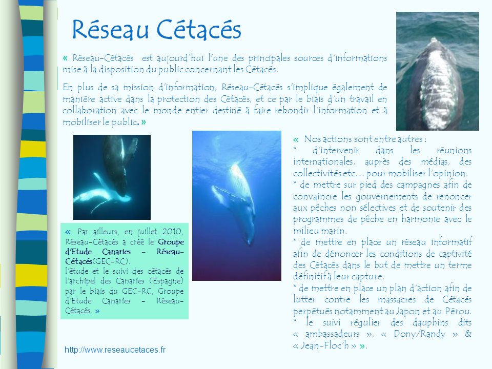 Réseau Cétacés « Réseau-Cétacés est aujourdhui l'une des principales sources d'informations mise à la disposition du public concernant les Cétacés. En