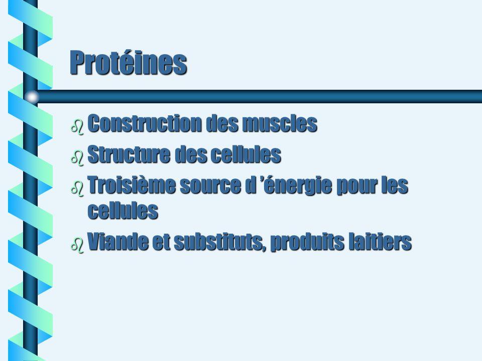 Protéines b Construction des muscles b Structure des cellules b Troisième source d énergie pour les cellules b Viande et substituts, produits laitiers