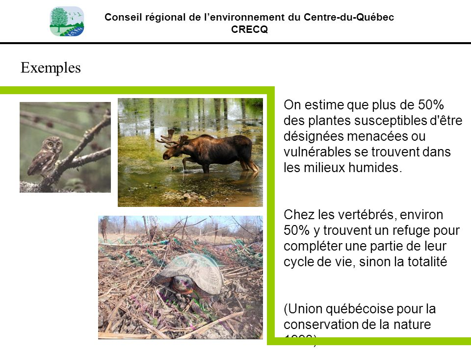 Conseil régional de lenvironnement du Centre-du-Québec CRECQ Exemples On estime que plus de 50% des plantes susceptibles d'être désignées menacées ou