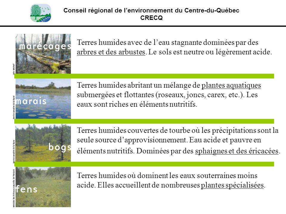 Conseil régional de lenvironnement du Centre-du-Québec CRECQ Terres humides avec de leau stagnante dominées par des arbres et des arbustes. Le sols es