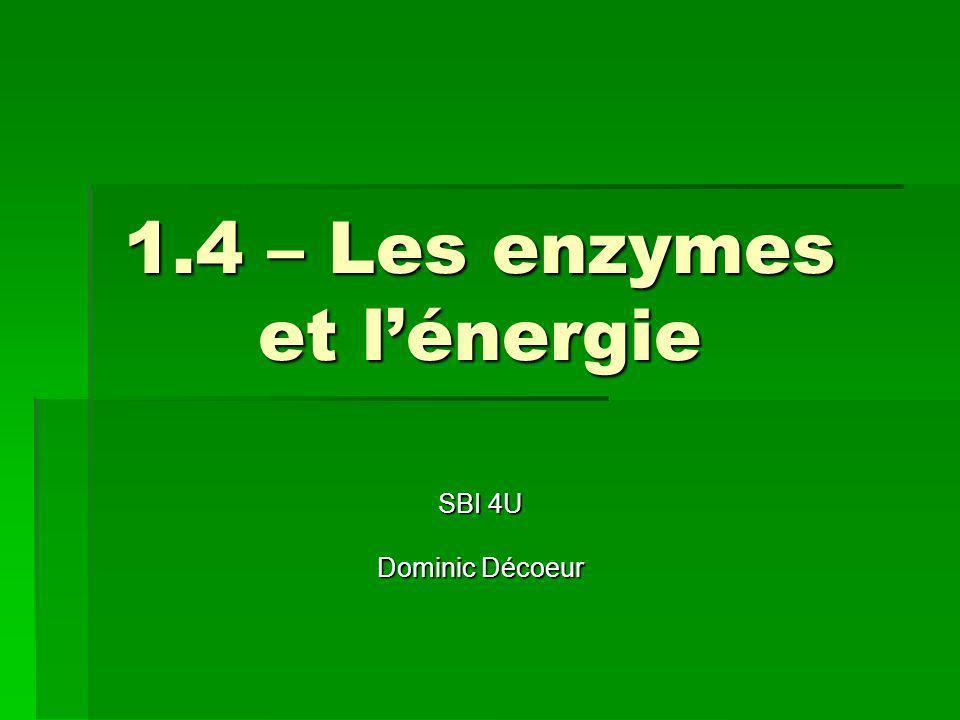 Introduction Les enzymes sont essentielles car elles servent de catalyseurs.
