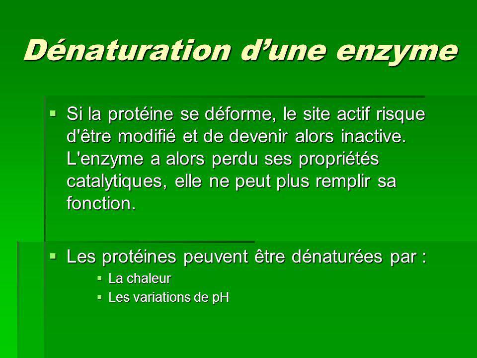 Dénaturation dune enzyme Si la protéine se déforme, le site actif risque d'être modifié et de devenir alors inactive. L'enzyme a alors perdu ses propr