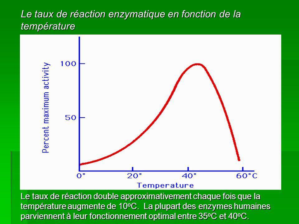 Le taux de réaction enzymatique en fonction de la température Le taux de réaction double approximativement chaque fois que la température augmente de