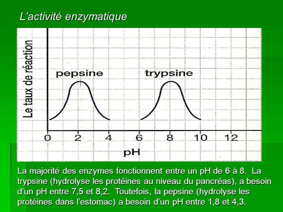 La majorité des enzymes fonctionnent entre un pH de 6 à 8. La trypsine (hydrolyse les protéines au niveau du pancréas), a besoin dun pH entre 7,5 et 8