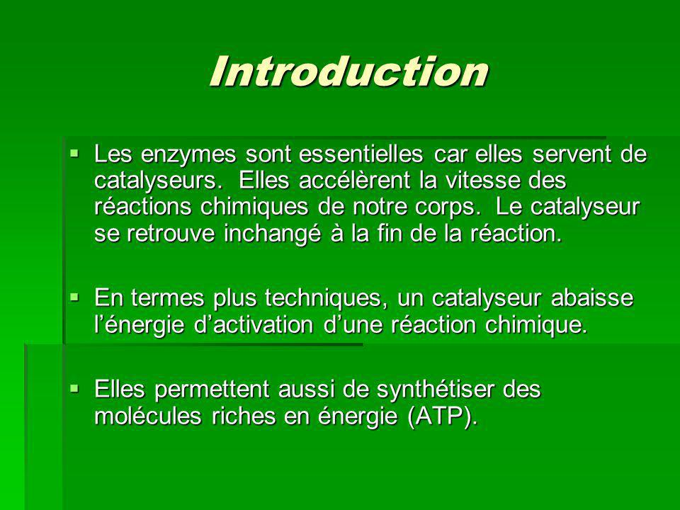 Introduction Les enzymes sont essentielles car elles servent de catalyseurs. Elles accélèrent la vitesse des réactions chimiques de notre corps. Le ca