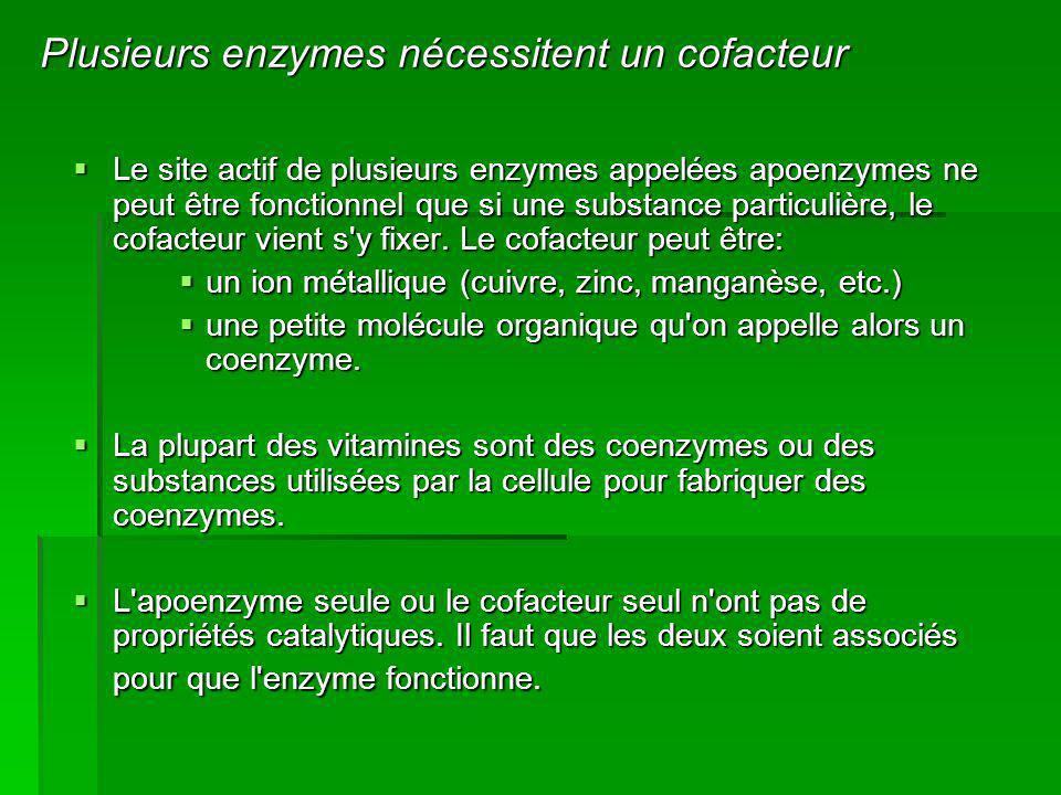 Le site actif de plusieurs enzymes appelées apoenzymes ne peut être fonctionnel que si une substance particulière, le cofacteur vient s'y fixer. Le co