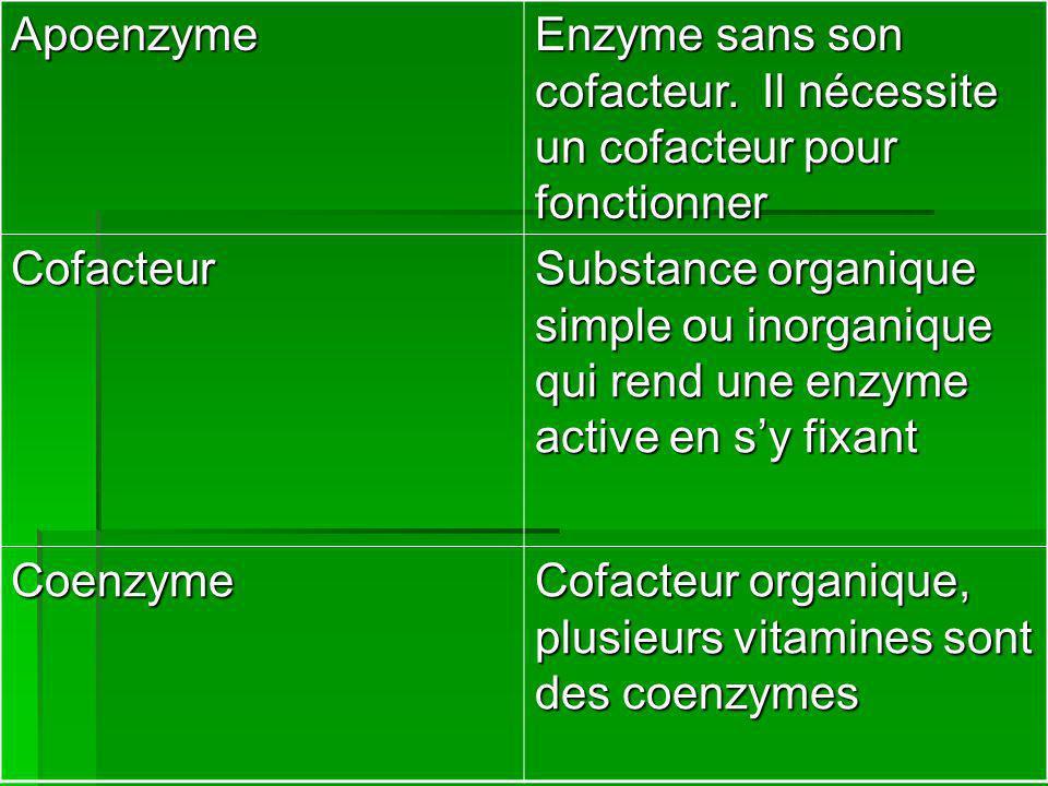 Apoenzyme Enzyme sans son cofacteur. Il nécessite un cofacteur pour fonctionner Cofacteur Substance organique simple ou inorganique qui rend une enzym