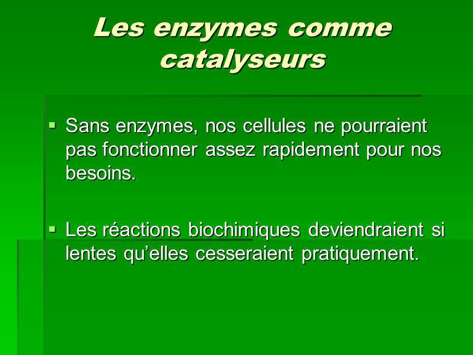 Les enzymes comme catalyseurs Sans enzymes, nos cellules ne pourraient pas fonctionner assez rapidement pour nos besoins. Sans enzymes, nos cellules n