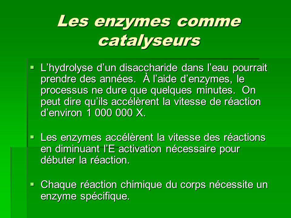 Les enzymes comme catalyseurs Lhydrolyse dun disaccharide dans leau pourrait prendre des années. À laide denzymes, le processus ne dure que quelques m