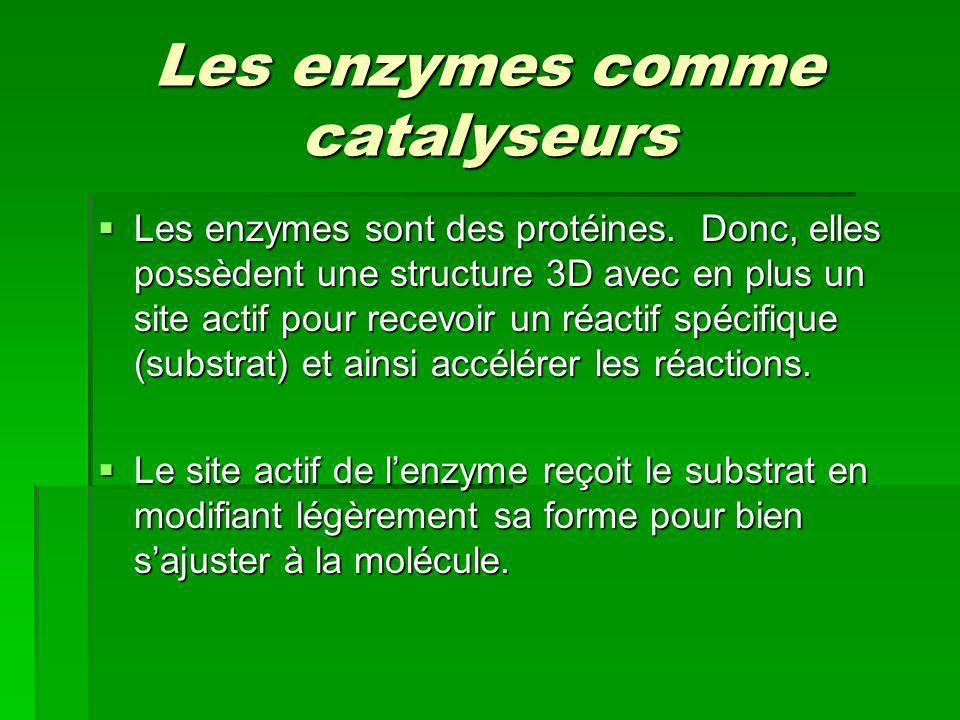 Les enzymes comme catalyseurs Les enzymes sont des protéines. Donc, elles possèdent une structure 3D avec en plus un site actif pour recevoir un réact
